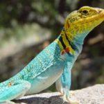 Что важно знать любителям рептилий?